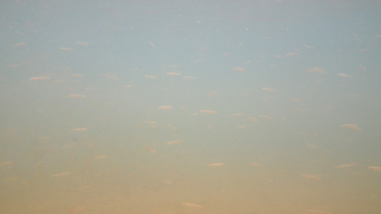 201108013_2