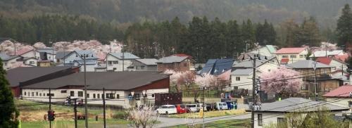 Sakura-005